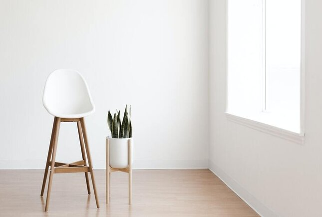indoor plants reduce anxiety
